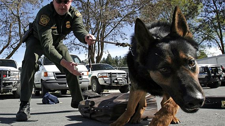DHS asking industry for rugged dog-wearable electronics to monitor health of trained canines