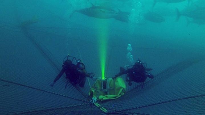 Undersea Camera 9 July 2019